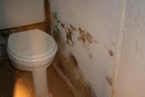 apartment mold in bathroom