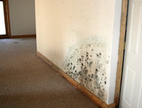 mold in apartment